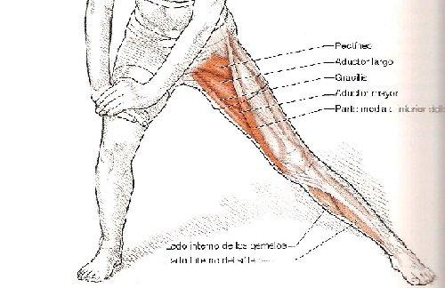 Estiramiento del aductor de la cadera con flexión de rodilla ...