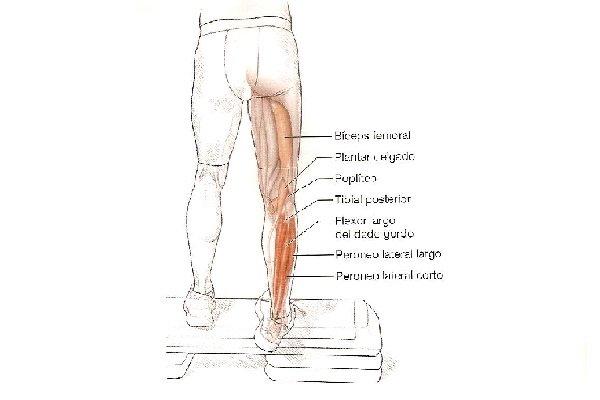 Estiramientos para corredores: Eversión del pie y flexor plantar ...