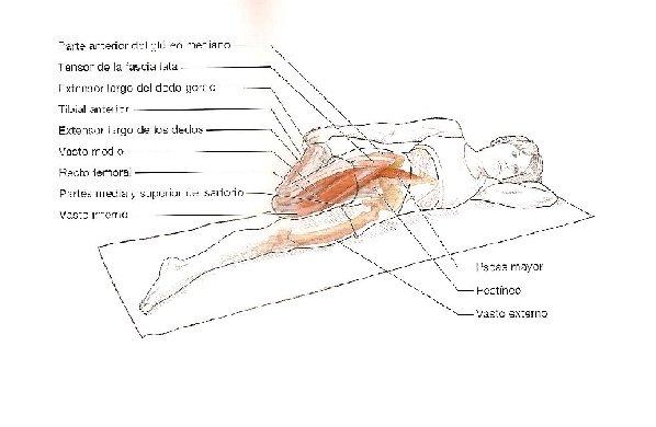 Estiramientos para corredores: Extensor de la rodilla y flexor de la ...